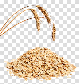 Oat transparent background PNG cliparts free download.