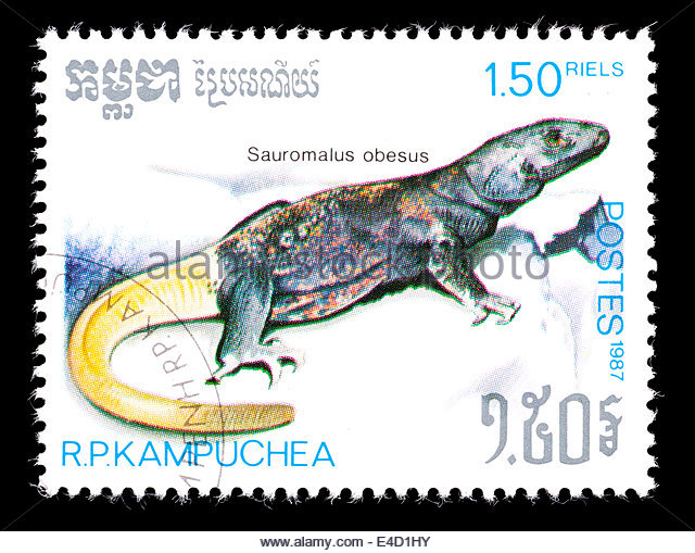 Sauromalus Obesus Stock Photos & Sauromalus Obesus Stock Images.