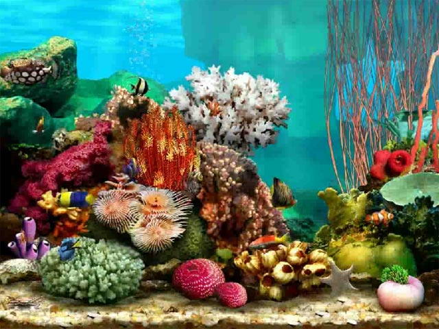 1000+ ideas about Aquarium Screensaver on Pinterest.