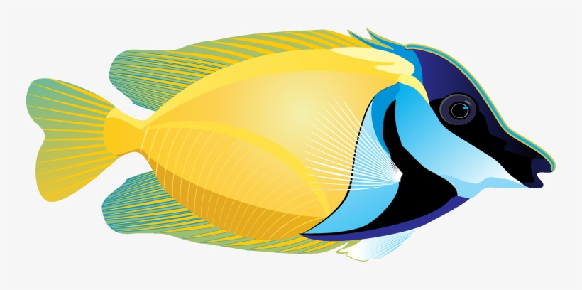 Marine Fish Clipart Face.