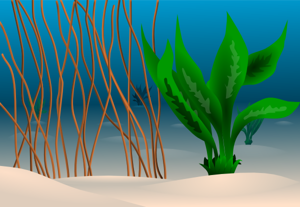 Ocean Floor Clip Art at Clker.com.