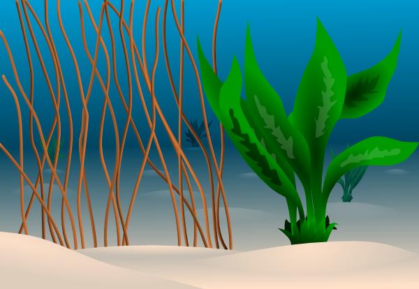 Ocean Floor Clip Art at Clker.com.