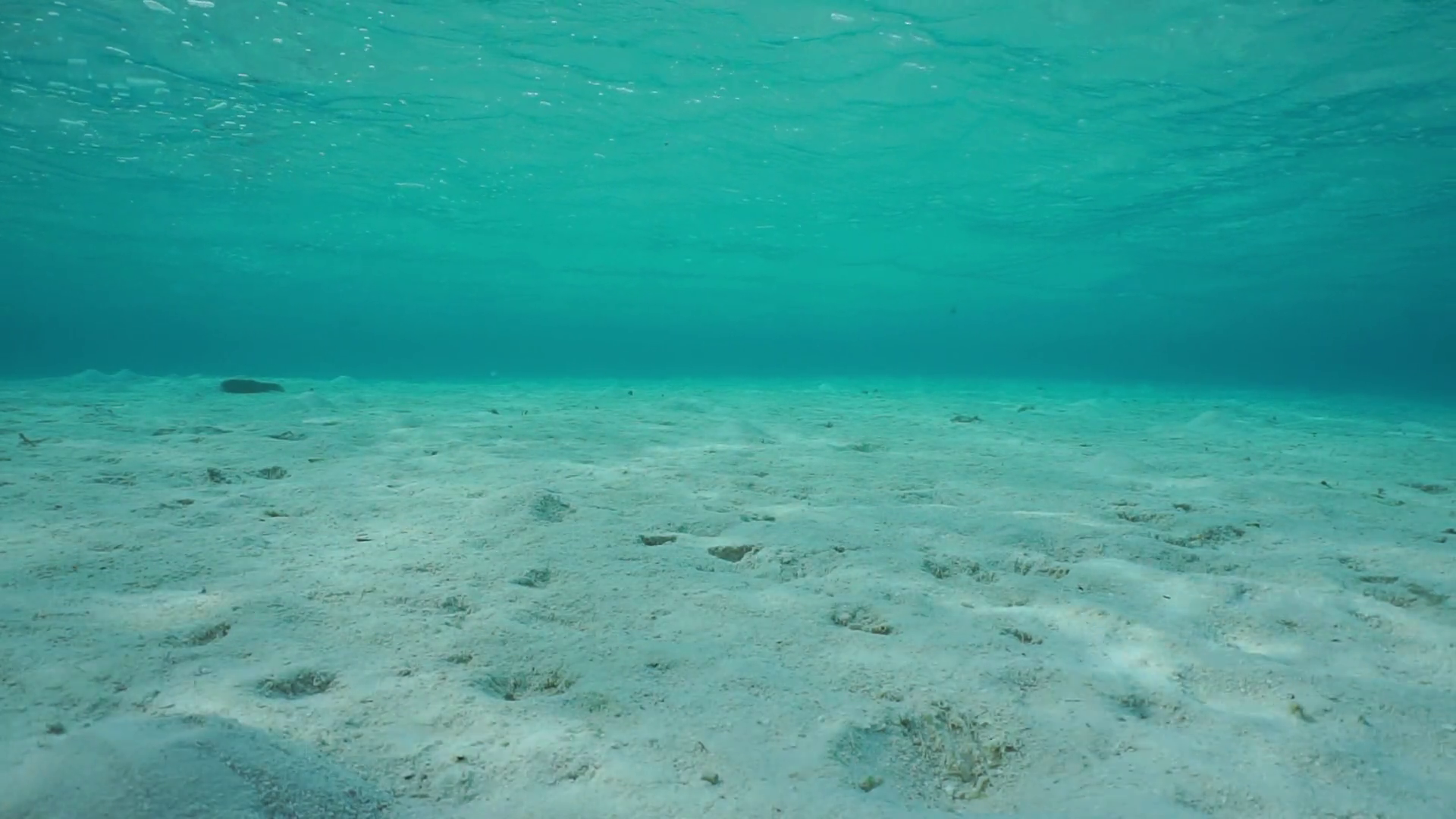 Sand underwater on a shallow ocean floor with ripples of water surface in  the lagoon of Bora Bora, natural scene, Pacific ocean, French Polynesia.