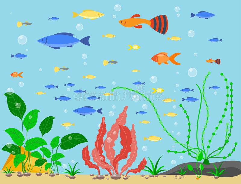 Aquatic Plants Stock Illustrations.