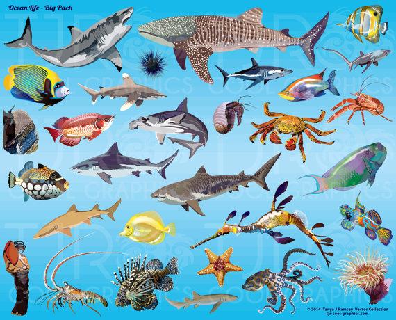 Ocean Life Big Pack Clip Art by JoyCreating on Etsy.