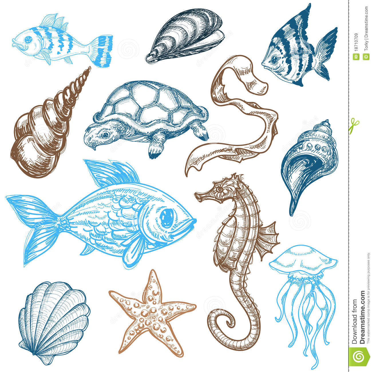 Realistic Ocean Animals Clipart.