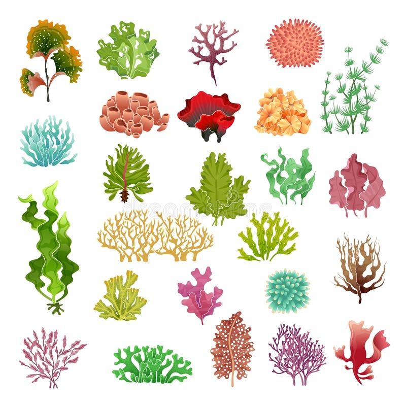 Ocean Plants Stock Illustrations.