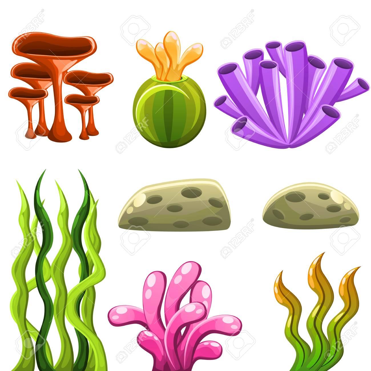 Sea plants and aquatic marine algae, seaweed and corals. Underwater...