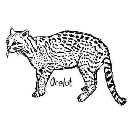 Ocelot clipart » Clipart Portal.