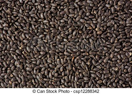 Stock Photo of Sweet Basil Seeds (Ocimum basilicum).