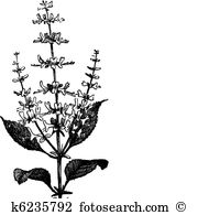 Ocimum Clipart Vector Graphics. 37 ocimum EPS clip art vector and.