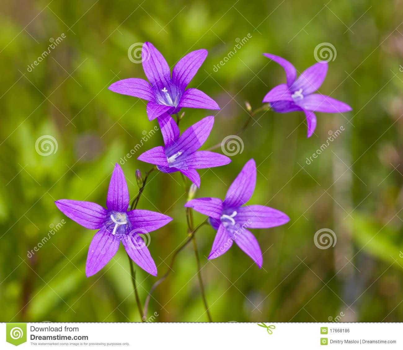 Flower Octet Royalty Free Stock Image.