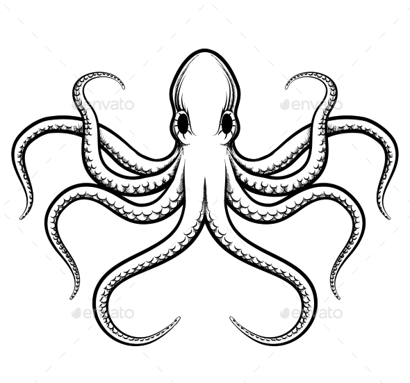 Black And White Octopus.