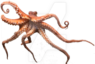 Download Octopus PNG Picture.
