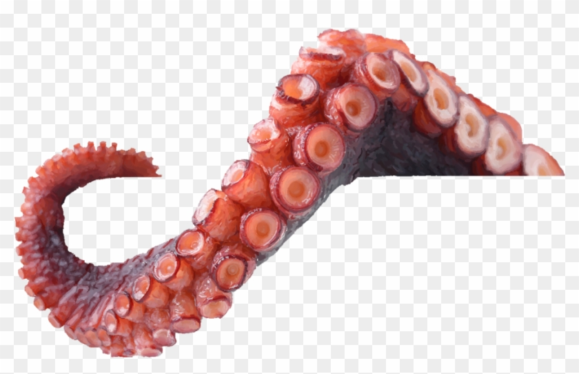 Octopus Tentacles Png Photo.