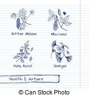 Ocimum sanctum Vector Clip Art Illustrations. 24 Ocimum sanctum.