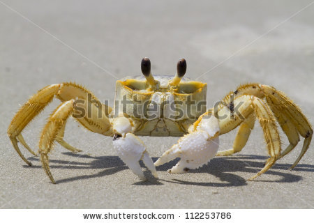 Ghost Crab Stock Images, Royalty.
