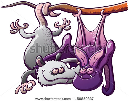 Odd Couple Composed By A Gray Opossum And A Purple Bat Hanging.