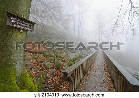 Stock Photography of Wooden Bridge in Beech Forest, Popular.