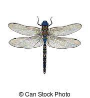 Odonata Illustrations and Stock Art. 64 Odonata illustration.
