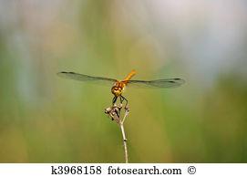 Odonata Clip Art and Stock Illustrations. 21 odonata EPS.