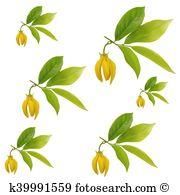 Cananga odorata Clip Art EPS Images. 19 cananga odorata clipart.