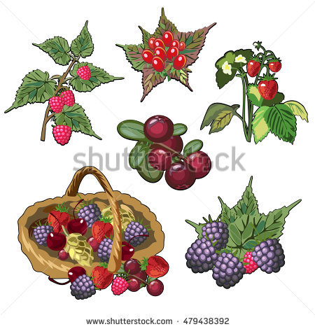 Wild Raspberry Stock Photos, Royalty.