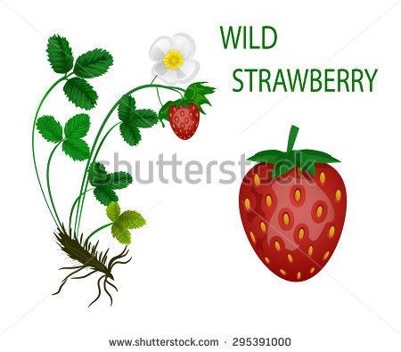 Of the wild fruits clipart #20