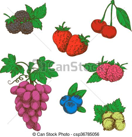 Clipart Vector of Wild forest and garden fruits colored sketches.