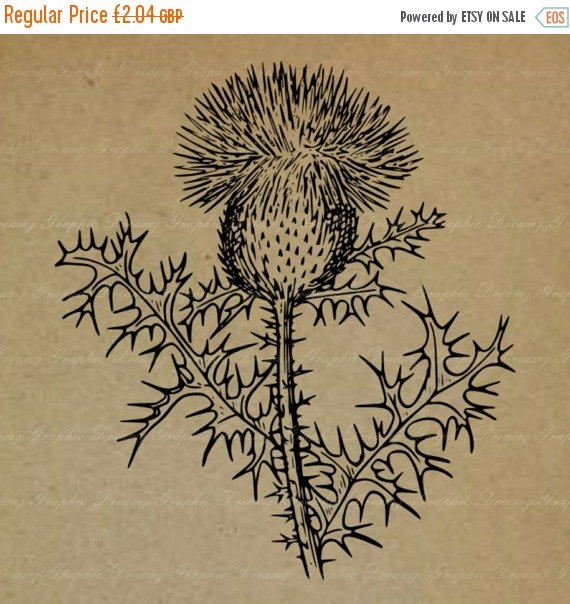 ON SALE 55% OFF Thistle No.Km913 Digital Image by GraphicDreamz.