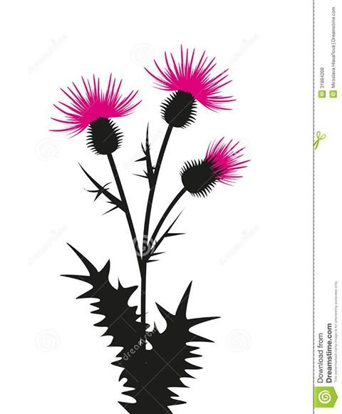 1000+ images about Thistle Heather Bluebells on Pinterest.