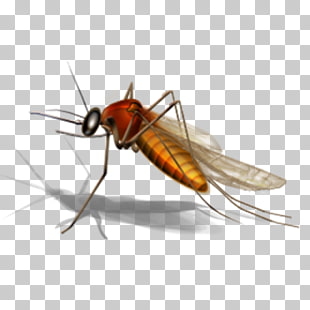 Office com clipart mosquito clipart images gallery for free.