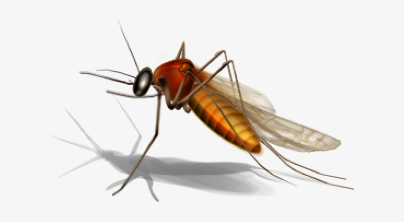 Mosquito Png Transparent Images.
