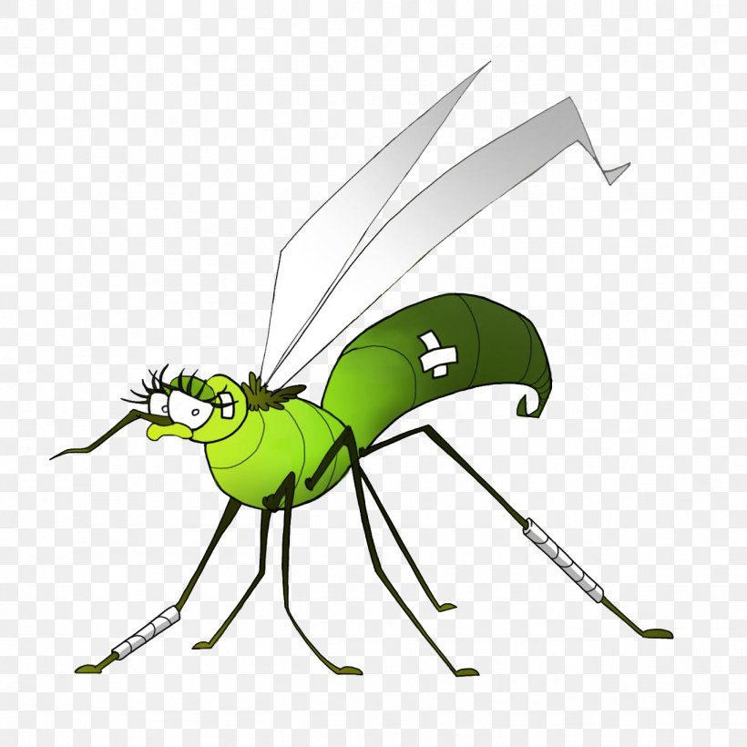 Insect Mosquito Dengue West Nile Fever West Nile Virus, PNG.