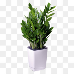 Office Plant PNG and Office Plant Transparent Clipart Free.