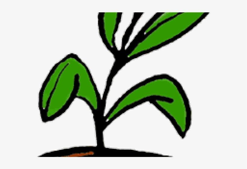 Pot Plant Clipart Office Plant.