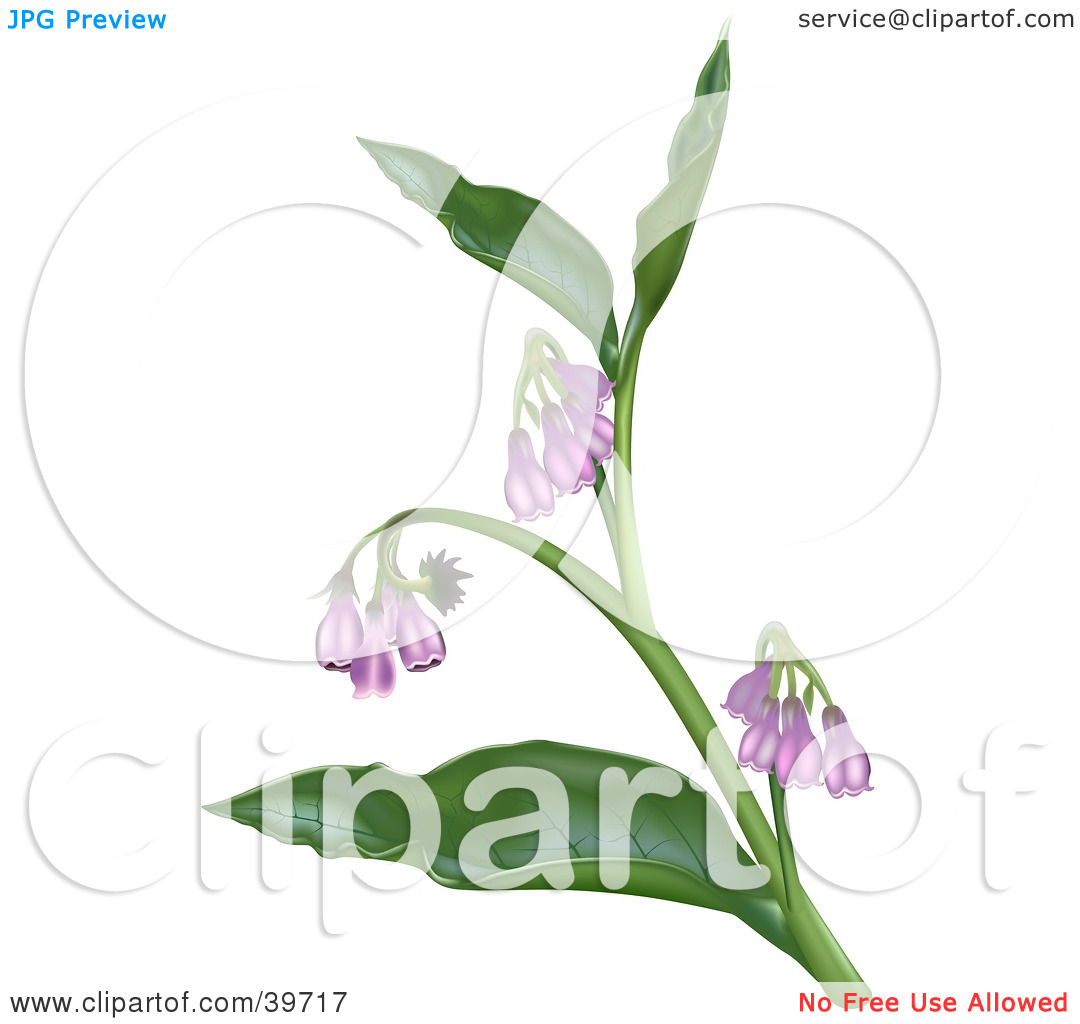 Clipart Illustration of a Plant With Purple Symphytum Officinale.