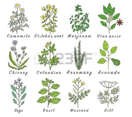 124 Officinale Stock Vector Illustration And Royalty Free.