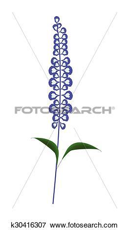 Clip Art of Purple Sage Flowers or Salvia Officinalis Flower.