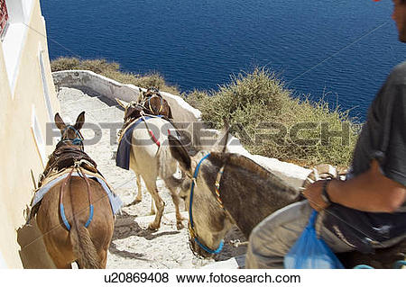 Pictures of Man Riding on Donkey down Stairs with saddled donkeys.
