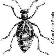 Oil beetle Vector Clipart Illustrations. 14 Oil beetle clip art.