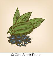 Oilseed Vector Clipart Illustrations. 37 Oilseed clip art vector.