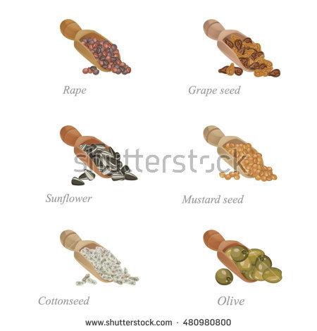 Oilseed Stock Vectors, Images & Vector Art.