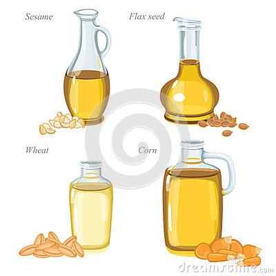 Oilseed Stock Illustrations.