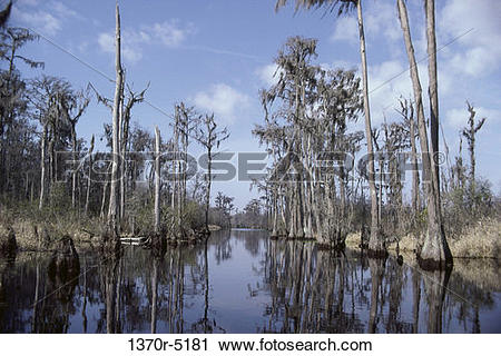 Stock Photography of Okefenokee Swamp, Georgia, USA 1370r.