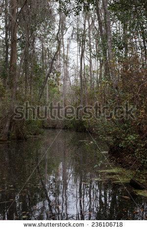 Okefenokee Swamp Stock Photos, Royalty.