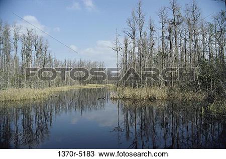 Stock Photo of Okefenokee Swamp, Georgia, USA 1370r.