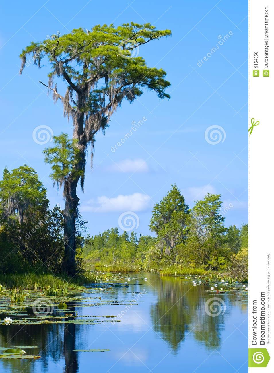 Okefenokee Swamp Royalty Free Stock Image.