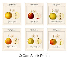 Clip Art of Graphics with old apple varieties.