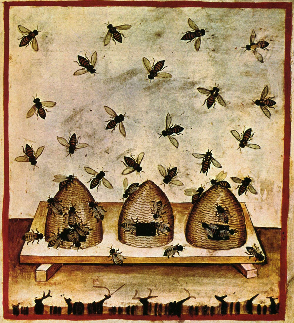 1000+ images about Honey bee on Pinterest.